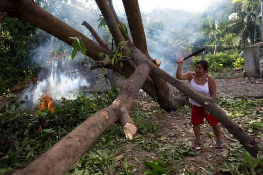 A woman works to chop firewood from a toppled mango tree, as other family members burn brush and debris, two days after the passage of Hurricane Patricia, in Chavarin, Colima. (timesunion.com)