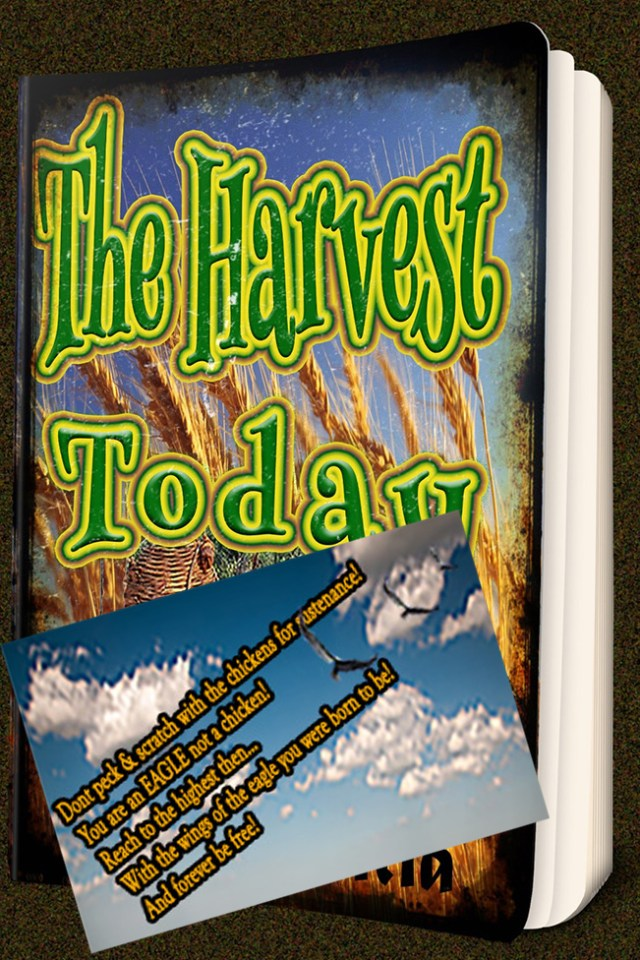 000000000000_1-final-verdion_2x3inchickensthe-harvest-today-book-cover