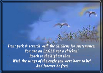 Dont scratch wChickens-eagle above trees