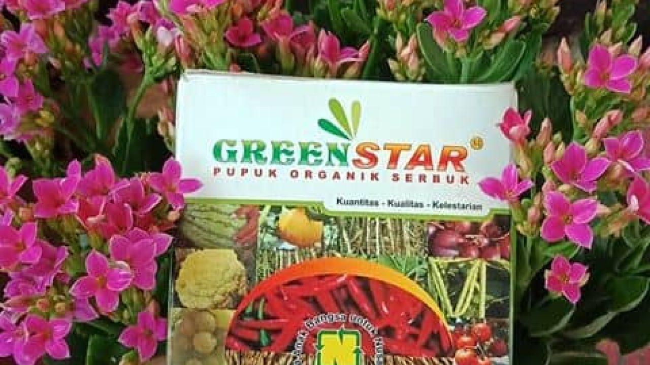 greenstar jual murah
