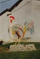 Coq Hargé couleur