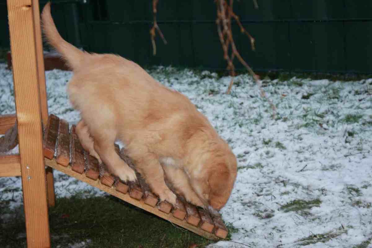 Jetzt hat die Bande auch Spaß im Schnee gehabt