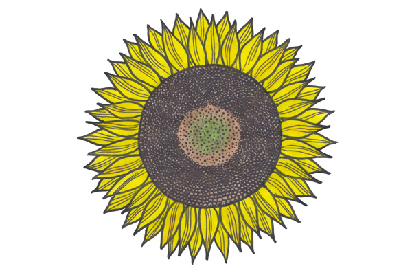 sunflower-scanned
