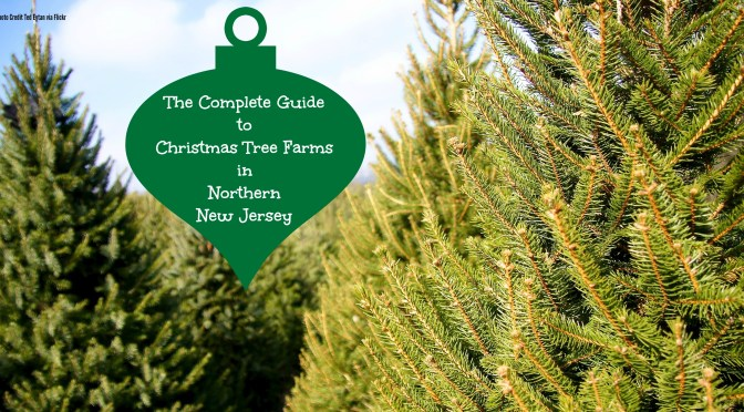 349fd85704b The Complete Guide To Christmas Tree Farms in North Jersey - Things ...
