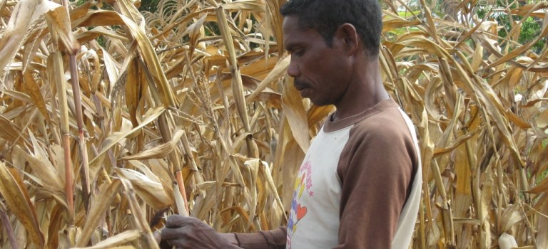Biogas: Alternative Energie auf Kosten der dritten Welt?