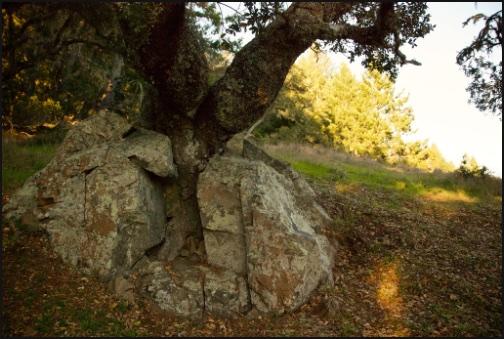 treeinrock