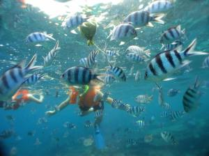 Snorkeling at Perhentian Island on Malaysias East Coast.
