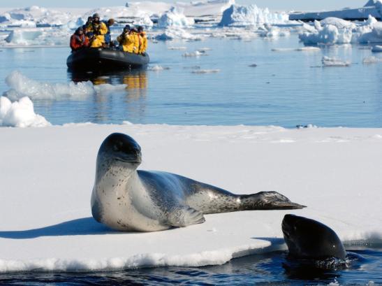 Seal basking in the Polar sun.