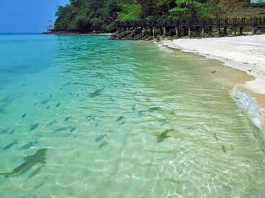 Nursing sharks by the beach in Langkawi, Kedah, Malaysia.
