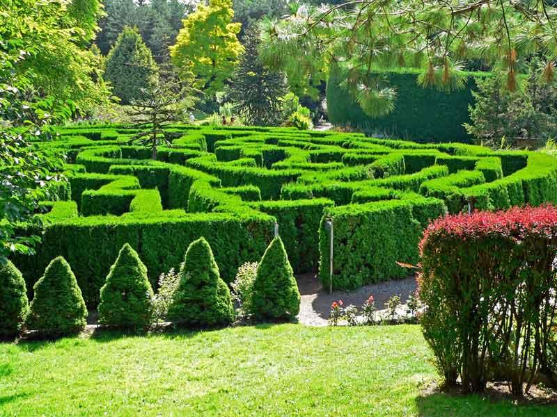 Maze at Vandusen Botanical Gardens in Vancouver.