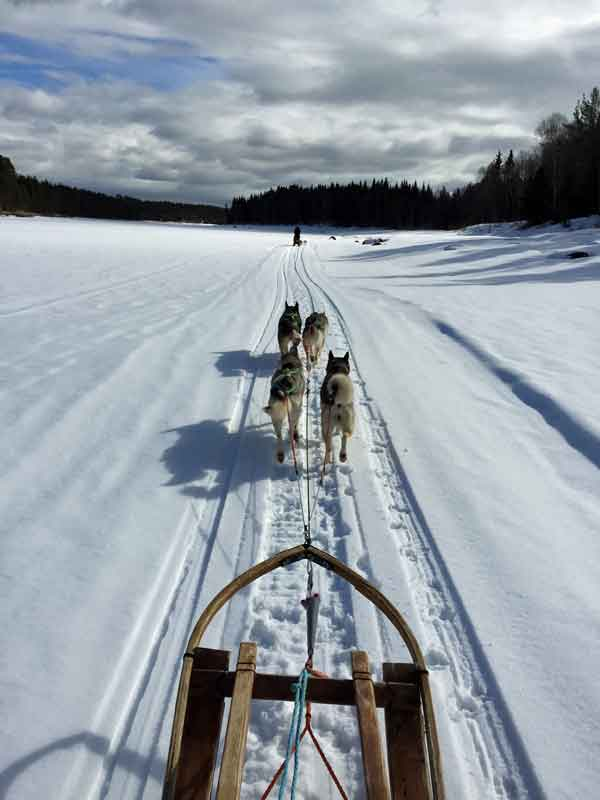 Dog sledding on a sunny winters day.