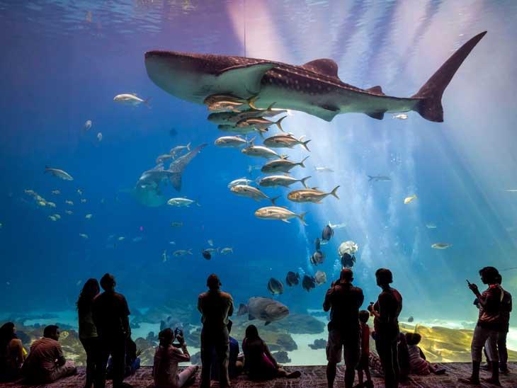 Georgia Aquarium.