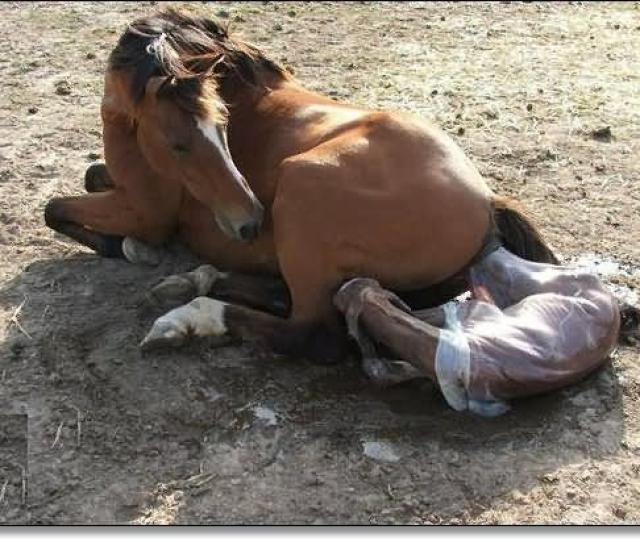 New Born Foal Pictures
