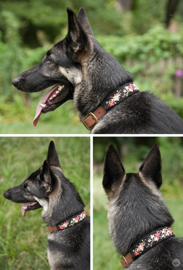 Embroidered Dog Collars with stitched floral patterns