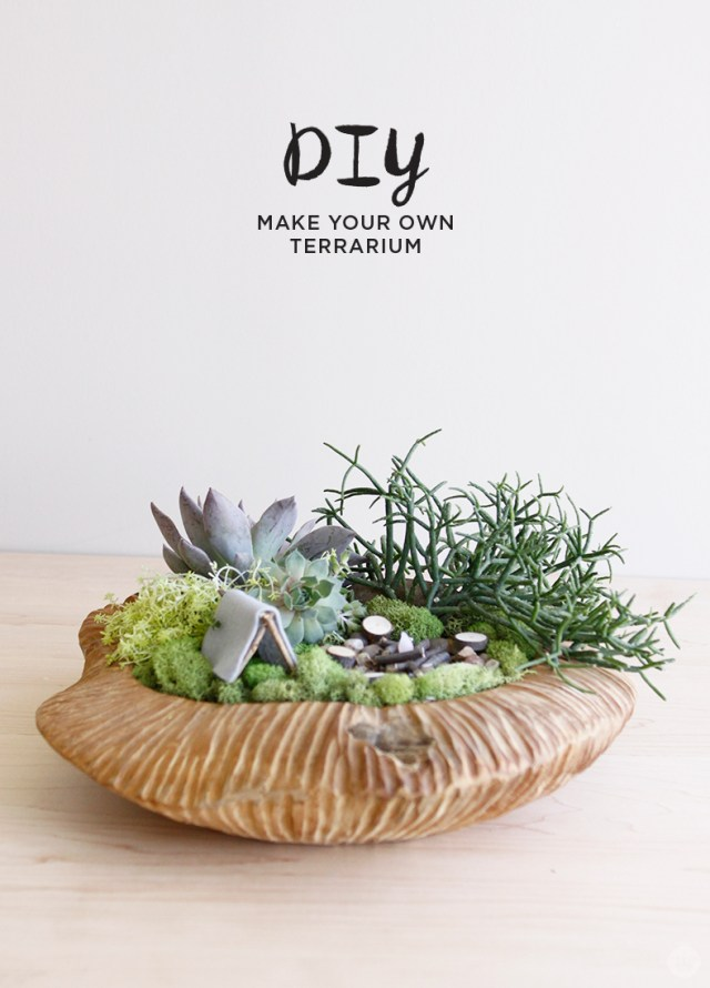 DIY Father's Day Terrarium with succulents and tiny campsite.