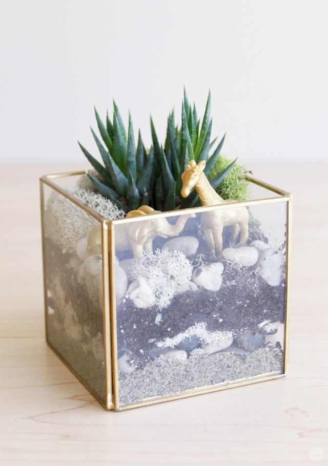 Golden jungle DIY Father's Day Terrarium