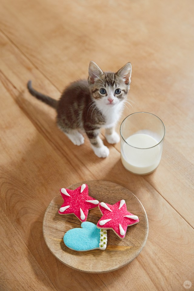 holiday pet photo ideas: pets with milk and cookies