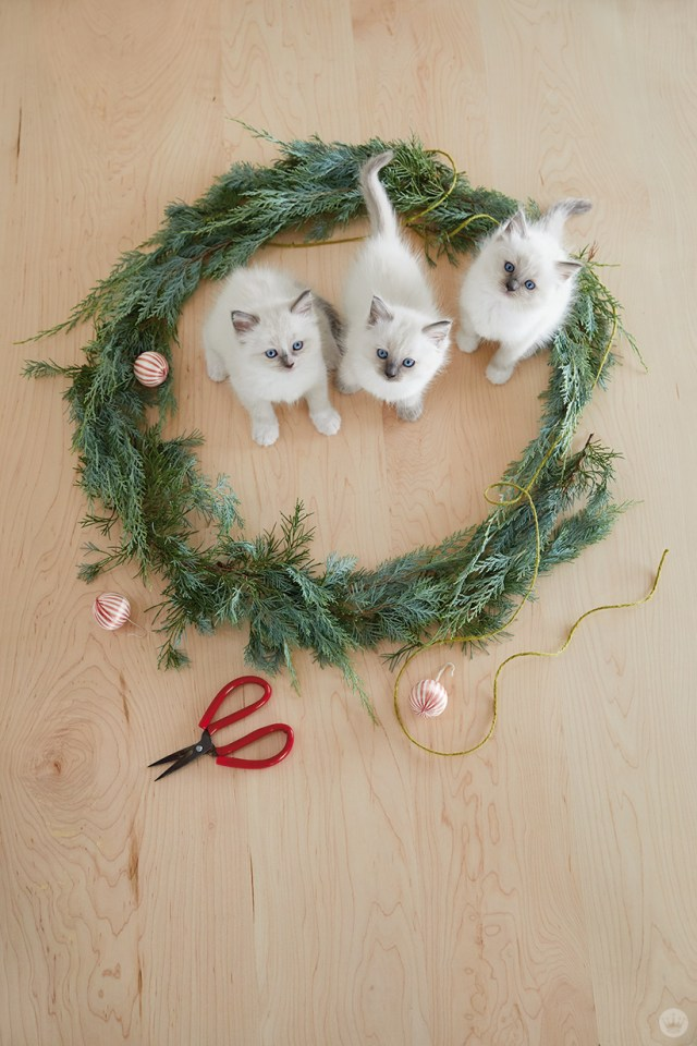 holiday pet photo ideas: cats in a wreath