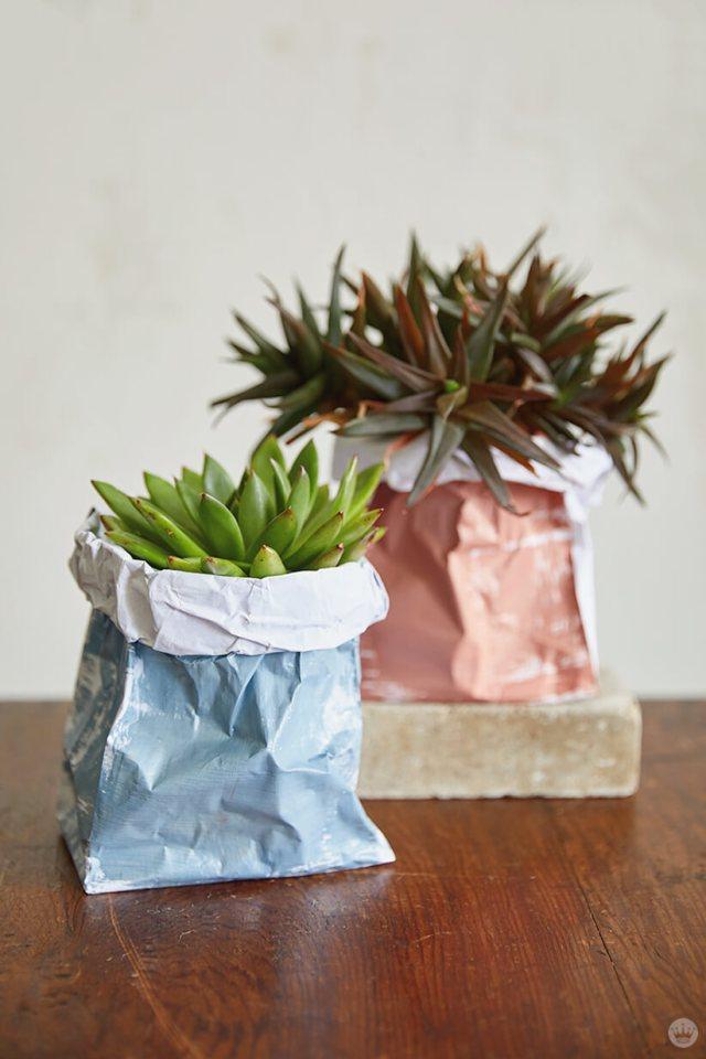 Plantes succulentes dans des sacs d'usine de papier bricolage | thinkmakeshareblog.com