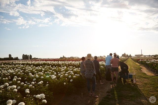 The team from Hallmark photographing flowers on a peony farm.