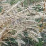 grass songs