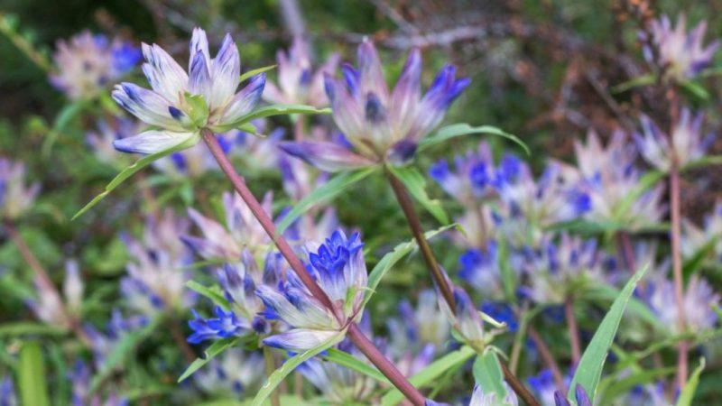 Flowers at Manito Park, Spokane, WA