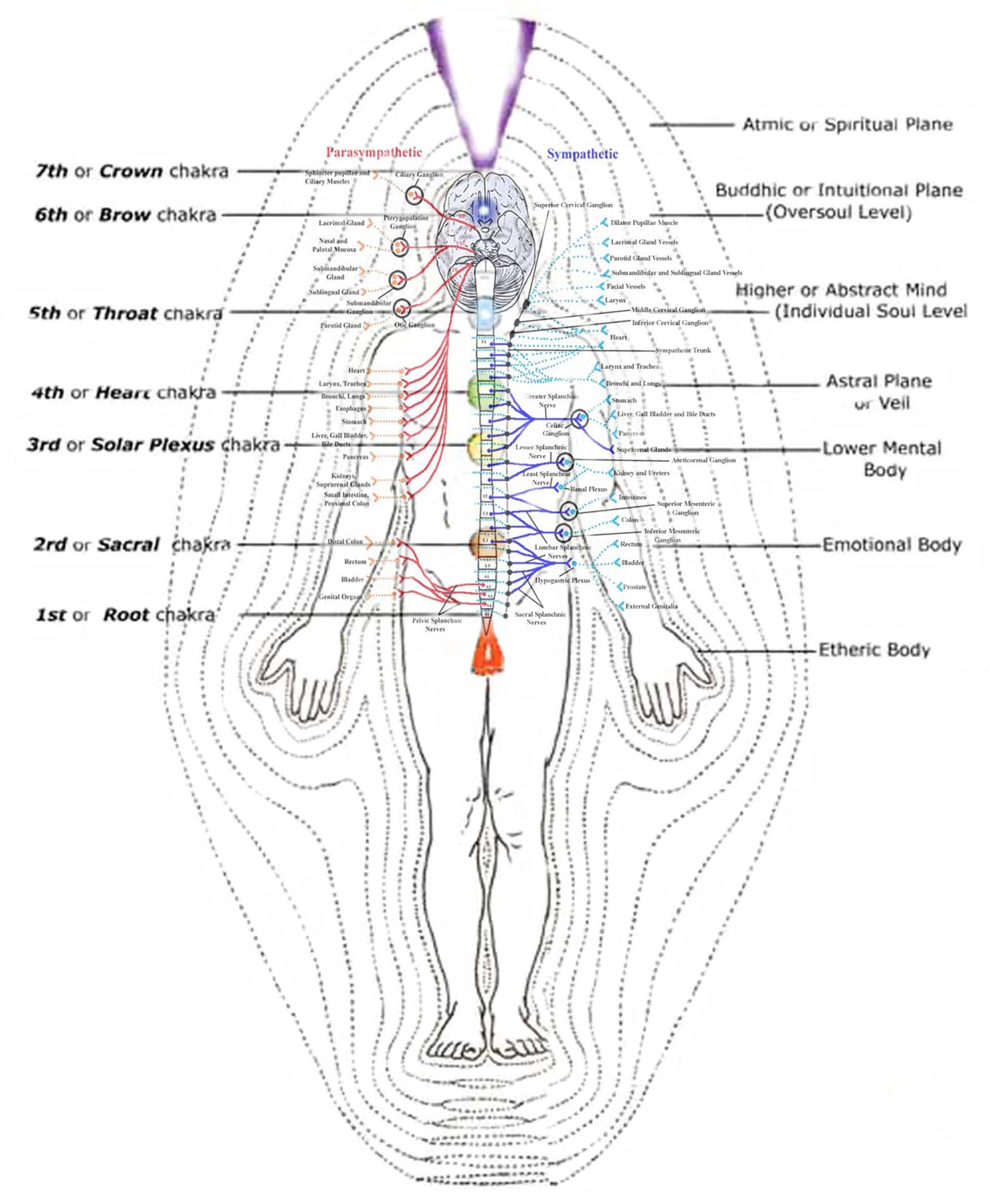 The Re Discovery Of The Human Energy Field Think