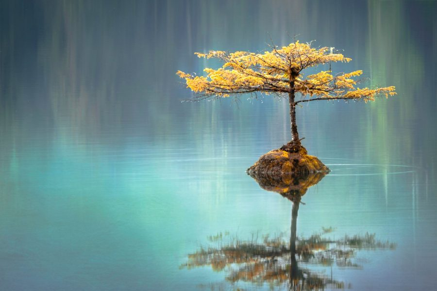 Tree and its reflection in water