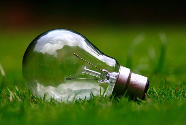 Light bulb lying on grass