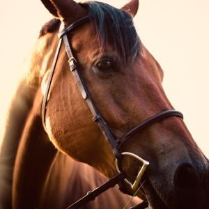Horse Comfort