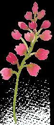 sprigs_pink2