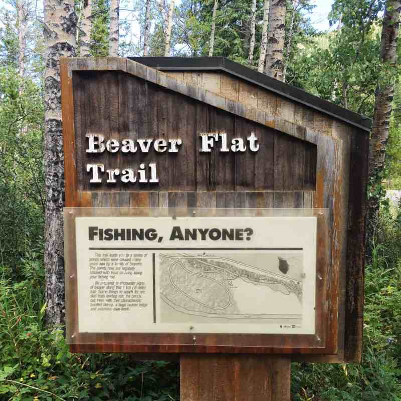 3 Fall Walks in Kananaskis to Do With Your Family: Beaver Flat Trail