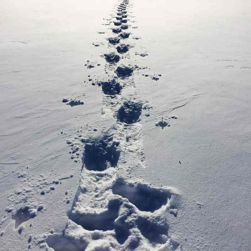 Snowshoe Checklist for Easy Treks