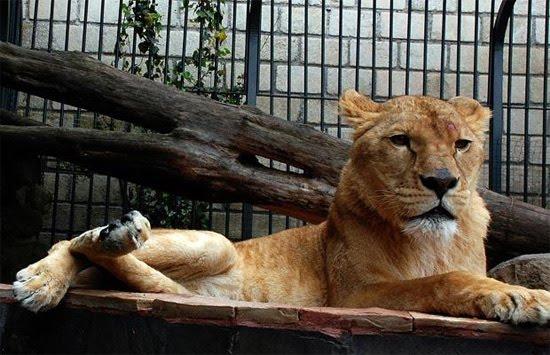 lionmexicodruglord