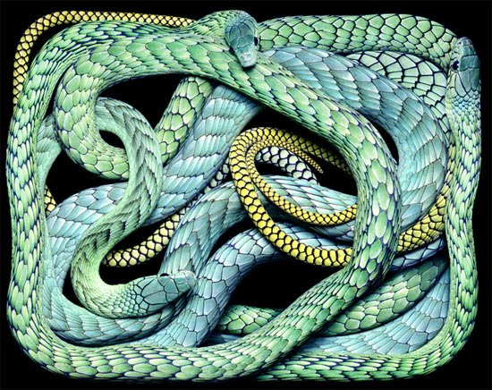 blue snake The Most Dangres Snakes In The World