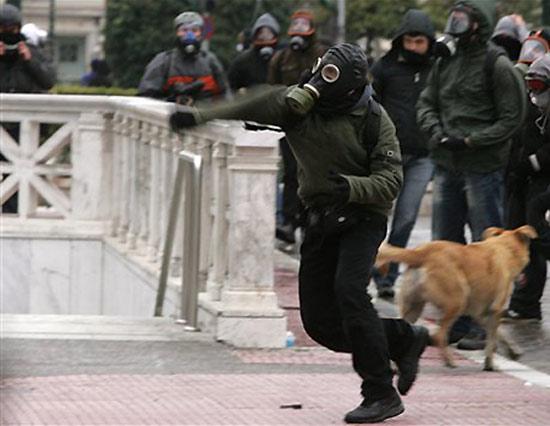 dog-riot-2