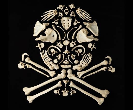 skull-bones