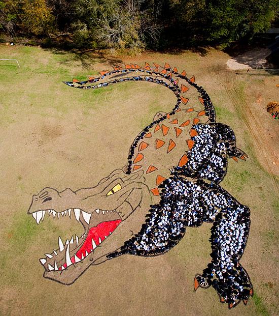 aligator-photo-sky