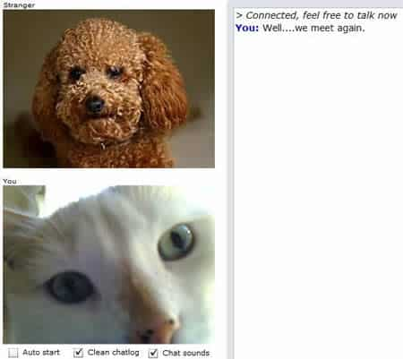 Cute Chat Roulette Cat and Dog