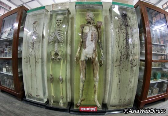 Tourist Attractions and The Bangkok Forensic Museum, Thailand