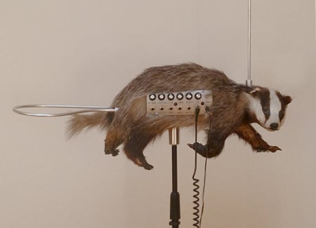 Bizarre Musical Instruments and The Badgermin