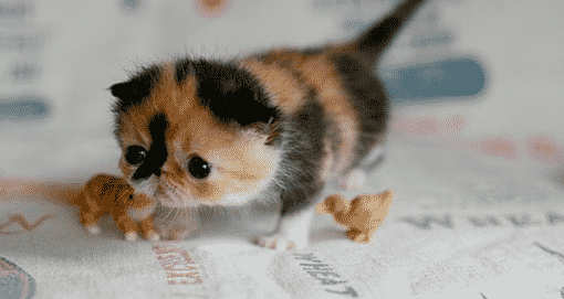 The Cute Cat and Cute Animals