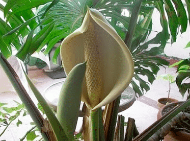 Bizarre Fruits and Monstera Deliciosa