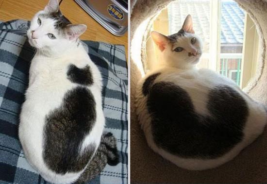 cat-markings-4-1