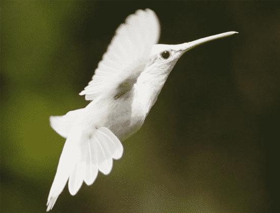 Ahummingbird