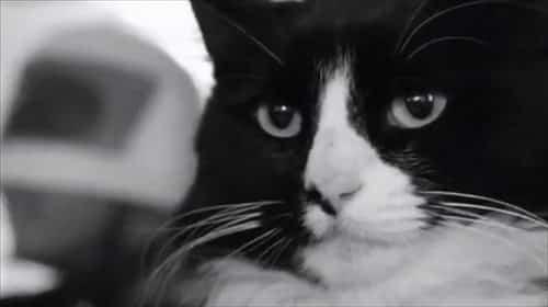 henri famous internet cats