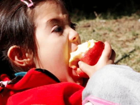 Weird Apple and Birch Tree Allergy