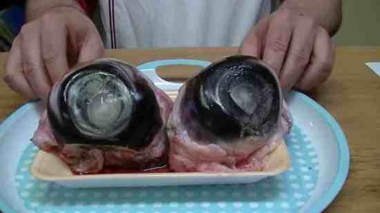 the 8 most disgusting foods in the world2