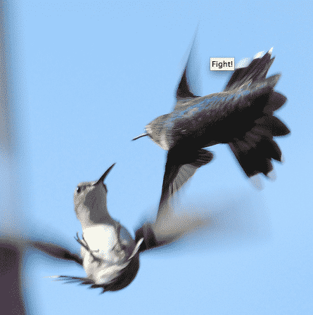 Humming birds, meeting and the worst analogies
