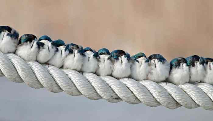 Birds Of A Feather Flock Together